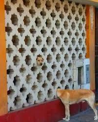 resume templates janitorial supervisor meme doge wallpaper meme 73 best 4n1m4l35 images on pinterest cutest animals dog cat and