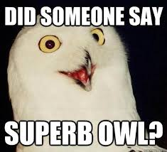 Superb Owl Meme - 13 best superb owl images on pinterest bird watching birds and owls