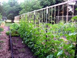 free trellis plans string bean trellis designs how to make a pea bountiful boxesbuild