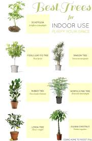 best plants for air quality air plant types indoor plants air quality indoor plants best