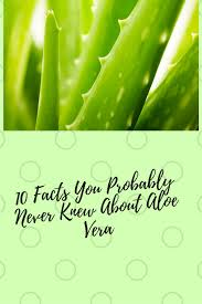 aloe vera plant facts 10 facts you probably didn t know about aloe vera erica ever after