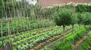 Veg Garden Layout Dobies Vegetable Garden Planner Dobies