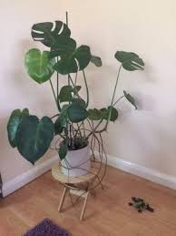 ikea vildapel plant stand in fareham hampshire gumtree