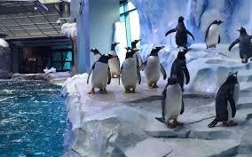 Detroit Zoo Night Lights by Detroit Zoo Gives Sneak Peek Of Its New Penguin Exhibit Travel