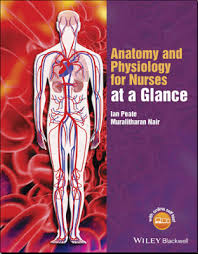 Anatomy And Physiology Made Incredibly Easy Pdf Anatomy And Physiology For Nurses At A Glance Pdf Peate Ian