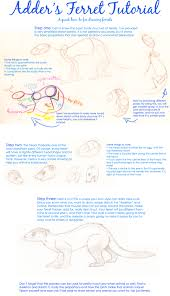 how to draw a ferret by little adder on deviantart