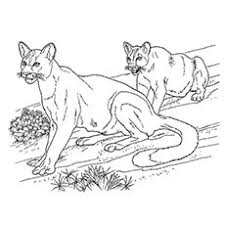 animal coloring pages for children top 25 free printable wild animals coloring pages online