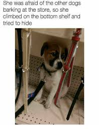 Dog Barking Meme - 25 best memes about dogs barking dogs barking memes