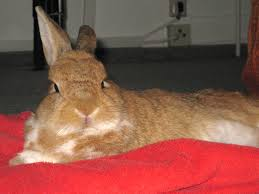color therapy gentle heal support rabbits