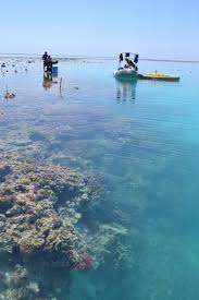 acidification already slowing coral reef growth sciencedaily