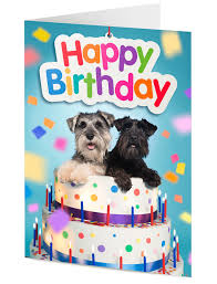 happy birthday card two funny miniature schnauzer dogs in a