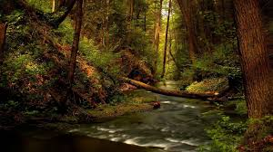 twilight wallpapers hd forest river wallpapers widescreen