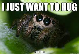 Cute Spider Meme - spider meme cute spider meme adorable spiders meme 3t11ub