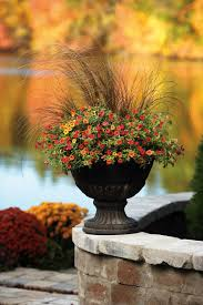 Outdoor Potted Plants Full Sun by Container Gardening In Fall Proven Winners