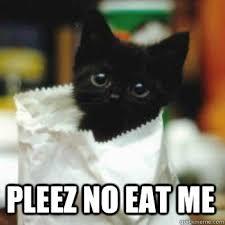 Scared Cat Meme - pleez no eat me scared cat quickmeme