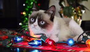 grumpy cat teams up with cat friends for special