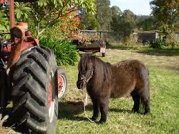 Horse Manure Vegetable Garden by Horse Manure Aussie Organic Gardening