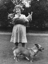 queen elizabeth dog princess elizabeth now queen elizabeth ii with two corgi dogs