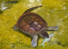 insights into the family tree of modern turtles