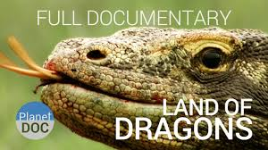 documentary komodo dragon land dragons planet doc