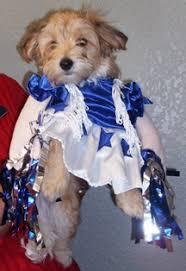 Cowboys Cheerleader Halloween Costume Carter County Animal Hospital Veterinarian Ardmore