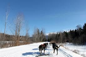 dog sledding with muddy paw sled dog kennel nh grand
