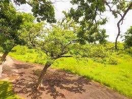 1212 arboretum ct waunakee wi local waunakee area experts