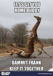 Go Home You Re Drunk Meme - 16 best go home you re drunk images on pinterest funny pics