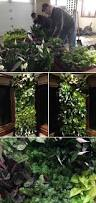 selected green wall projects vertical landscape architects