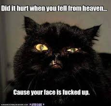 It S Messed Up Funny - 251 best laugh my ass off images on pinterest funny stuff funny