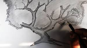 pencil sketch trees drawing pencil