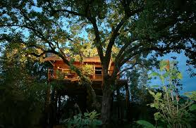 cool tree house 7 best tree houses in india tree house resorts in india tripoto