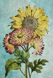 Sunflowers Vintage Home Decor Wall Art Shabby Chic Gift Botanical
