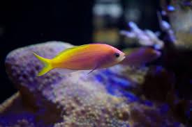 aquarium maintenance aquarium services of oregon llc