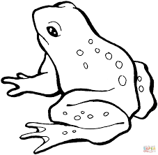 frog 13 coloring page free printable coloring pages