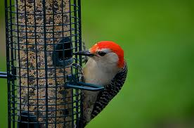 bird feeders for your backyard blain u0027s farm u0026 fleet blog
