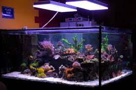 led lights for coral tanks tank development in france after 2 years running atlantik led