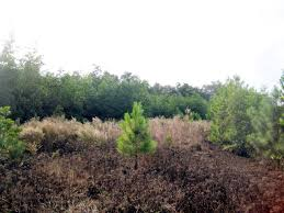 Palatka Florida Map by Sold Florahome Timber And Hunting Property In Putnam County