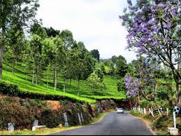 Best Places To Visit In Coonoor Onehowto