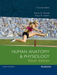 Human Anatomy And Physiology By Elaine N Marieb Human Anatomy And Physiology Custom Edition Vitalsource Etext