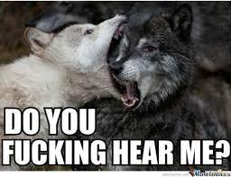 Meme Wolf - insanity wolves wife by kitkat1965 meme center