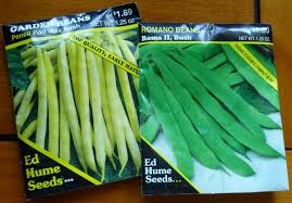 Types Of Garden Beans - growing greener in the pacific northwest july 2011