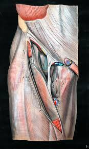 What Is Human Anatomy And Physiology 411 Best Anatomy Images On Pinterest Anatomy Anatomy Art And