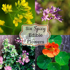 flowers edible decorate your food six spicy edible flowers