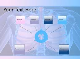powerpoint design lungs human lungs powerpoint template powerpoint slides template powerpoint