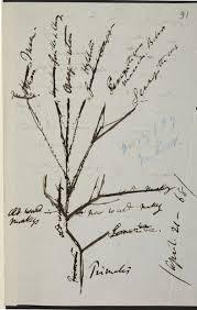 darwin s evolutionary trees
