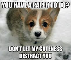 Cute Puppy Memes - distractingly cute puppy memes quickmeme