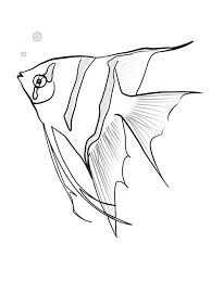 angel fish coloring pages coloring