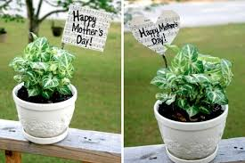 mothers day plants how to s day plant flag crafting a green world