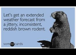 the funniest groundhog day someecards funny winter quotes